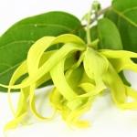 Ylang-Ylang en tu jardín y hogar