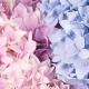 Una Melodía de Rosa Cuarzo y Serenidad: Los Colores Pantone 2016 Como Fragrancia